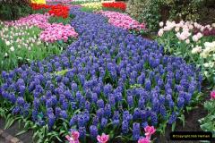 2012-04-26 Keukenhof Gardens.  (193)193
