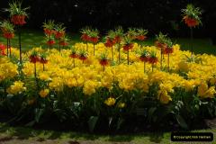 2012-04-26 Keukenhof Gardens.  (195)195