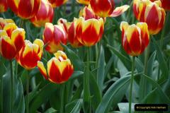 2012-04-26 Keukenhof Gardens.  (197)197
