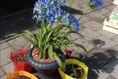 2012-04-26 Keukenhof Gardens.  (211)211