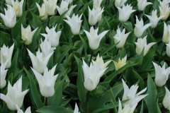 2012-04-26 Keukenhof Gardens.  (21)21