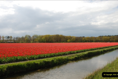 2012-04-26 Keukenhof Gardens.  (218)218