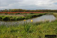 2012-04-26 Keukenhof Gardens.  (221)221
