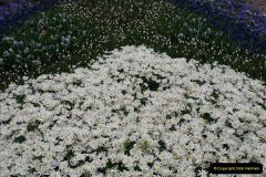 2012-04-26 Keukenhof Gardens.  (26)26