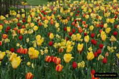 2012-04-26 Keukenhof Gardens.  (31)31