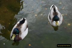 2012-04-26 Keukenhof Gardens.  (36)36