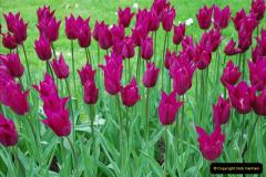 2012-04-26 Keukenhof Gardens.  (48)48