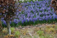 2012-04-26 Keukenhof Gardens.  (50)50
