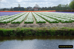 2012-04-26 Keukenhof Gardens.  (58)58