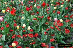 2012-04-26 Keukenhof Gardens.  (65)65