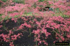 2012-04-26 Keukenhof Gardens.  (71)71