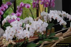 2012-04-26 Keukenhof Gardens.  (75)75