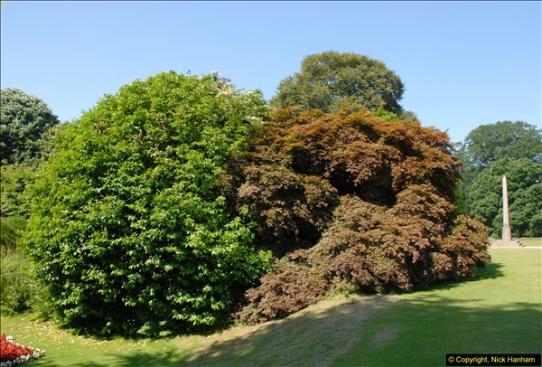 2013-07-08 Kingston Lacy, Wimborne, Dorset.   (40)040
