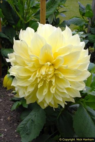2015-07-15 Kingston Maurward Gardens & Animal Park, Dorchester, Dorset.  (73)073