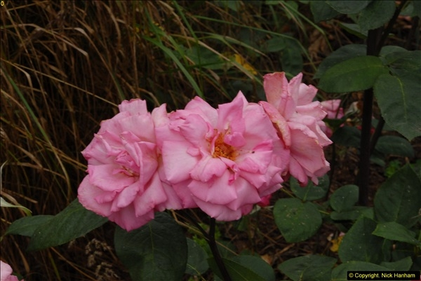 2015-07-15 Kingston Maurward Gardens & Animal Park, Dorchester, Dorset.  (92)092
