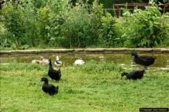 2015-07-15 Kingston Maurward Gardens & Animal Park, Dorchester, Dorset.  (208)208