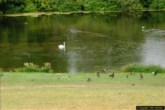 2015-07-15 Kingston Maurward Gardens & Animal Park, Dorchester, Dorset.  (28)028