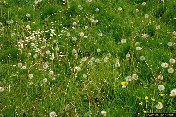 2015-05-15 Lacock, Wiltshire.  (78)078