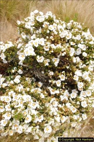 2015-06-25 Lyme Regis, Dorset.  (32)32