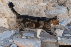 2016-10-04 Ephesus, Turkey.  (104)104