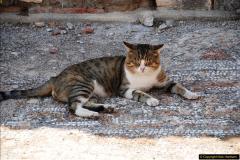 2016-10-04 Ephesus, Turkey.  (131)131