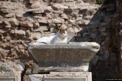 2016-10-04 Ephesus, Turkey.  (148)148
