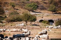 2016-10-04 Ephesus, Turkey.  (84)084