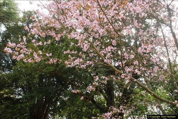 2015-04-17 Minterne Magna Gardens, Dorset.  (10)010
