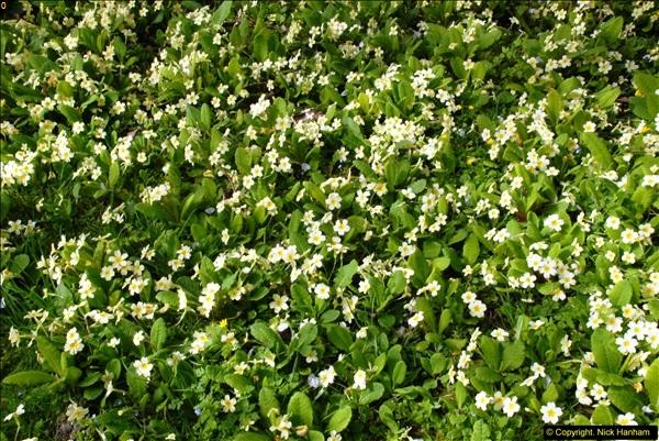 2015-04-17 Minterne Magna Gardens, Dorset.  (12)012