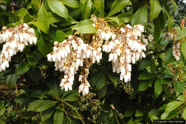 2015-04-17 Minterne Magna Gardens, Dorset.  (37)037
