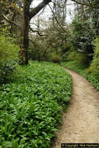 2015-04-17 Minterne Magna Gardens, Dorset.  (49)049
