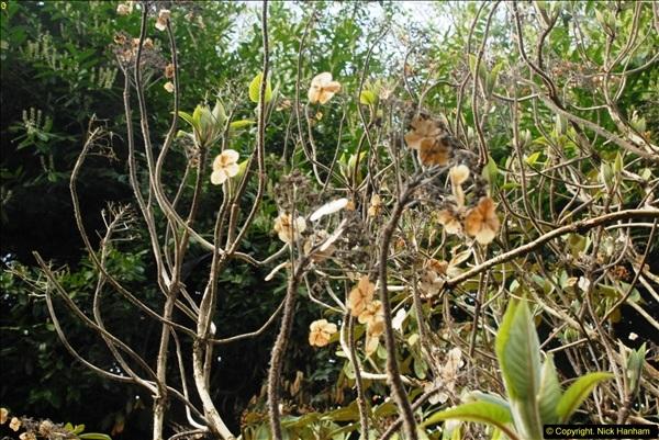 2015-04-17 Minterne Magna Gardens, Dorset.  (54)054