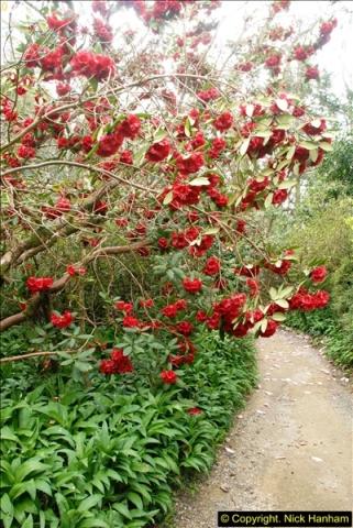 2015-04-17 Minterne Magna Gardens, Dorset.  (59)059