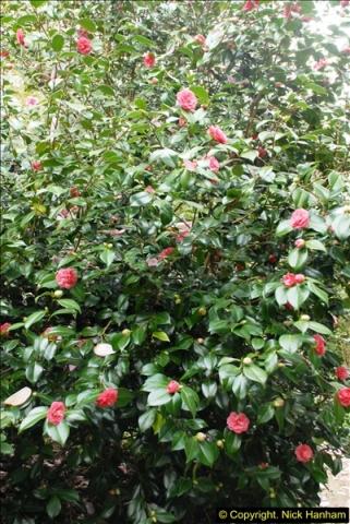 2015-04-17 Minterne Magna Gardens, Dorset.  (62)062