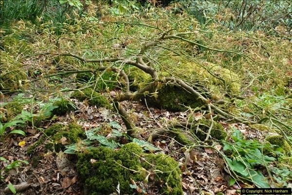 2015-04-17 Minterne Magna Gardens, Dorset.  (66)066