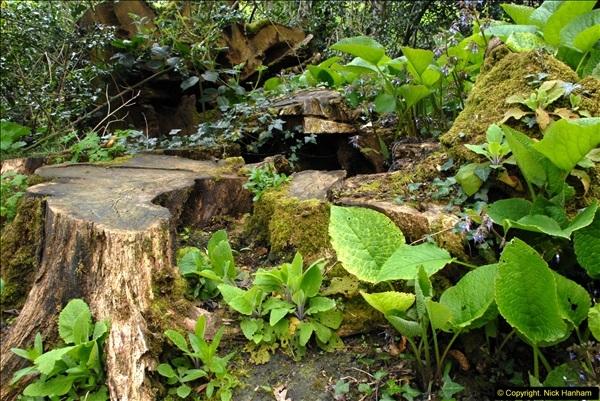 2015-04-17 Minterne Magna Gardens, Dorset.  (72)072