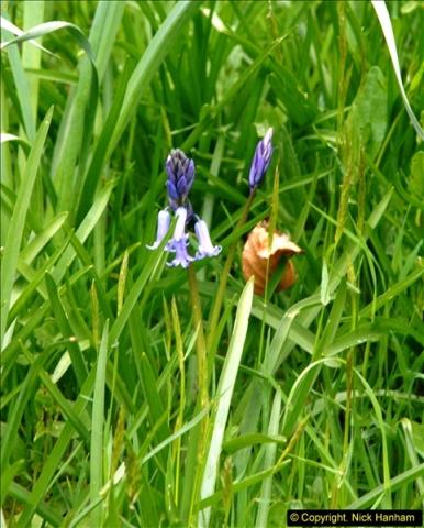 2015-04-17 Minterne Magna Gardens, Dorset.  (74)074