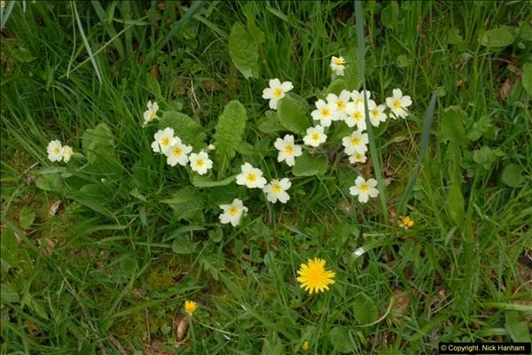 2015-04-17 Minterne Magna Gardens, Dorset.  (77)077