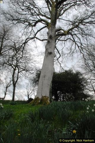 2015-04-17 Minterne Magna Gardens, Dorset.  (78)078