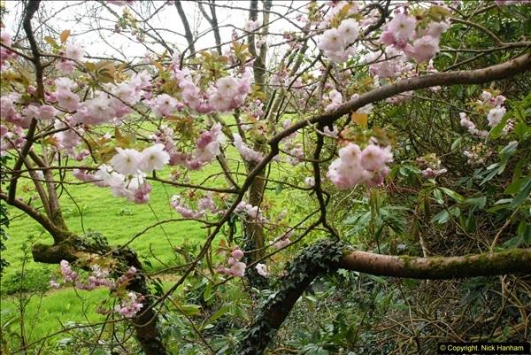 2015-04-17 Minterne Magna Gardens, Dorset.  (81)081