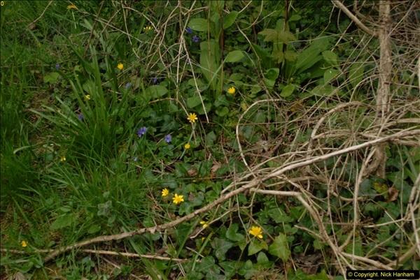 2015-04-17 Minterne Magna Gardens, Dorset.  (85)085