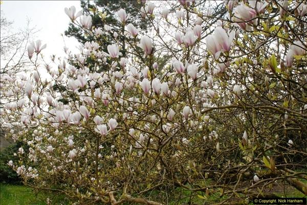 2015-04-17 Minterne Magna Gardens, Dorset.  (86)086