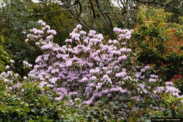 2015-04-17 Minterne Magna Gardens, Dorset.  (87)087