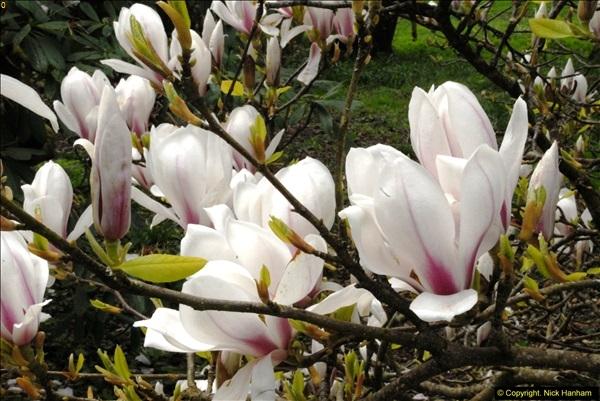 2015-04-17 Minterne Magna Gardens, Dorset.  (88)088