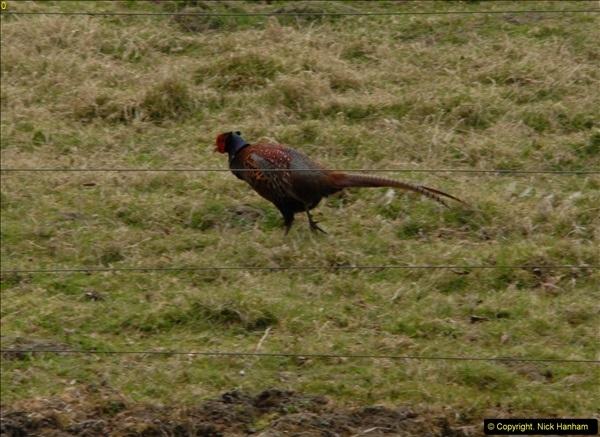2015-04-17 Minterne Magna Gardens, Dorset.  (90)090