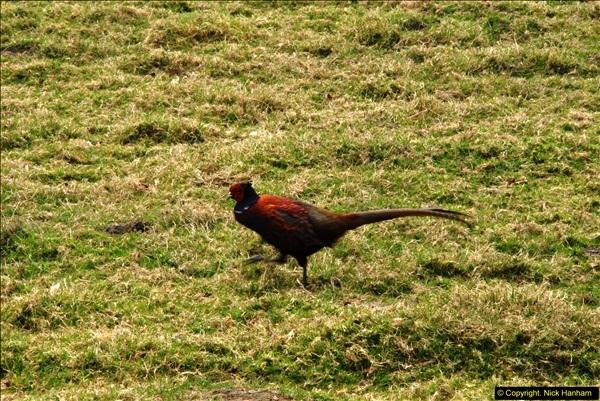 2015-04-17 Minterne Magna Gardens, Dorset.  (91)091