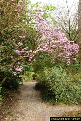 2015-04-17 Minterne Magna Gardens, Dorset.  (93)093