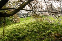 2015-04-17 Minterne Magna Gardens, Dorset.  (11)011