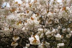 2015-04-17 Minterne Magna Gardens, Dorset.  (13)013