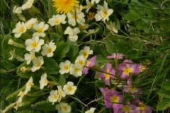 2015-04-17 Minterne Magna Gardens, Dorset.  (15)015